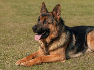 Лечебната сила на кучетата