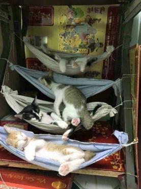 Странни места, на които спят котките