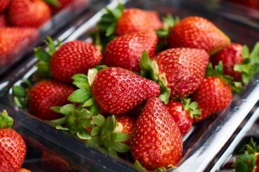 Консумацията на ягоди може да намали риска от Алцхаймер
