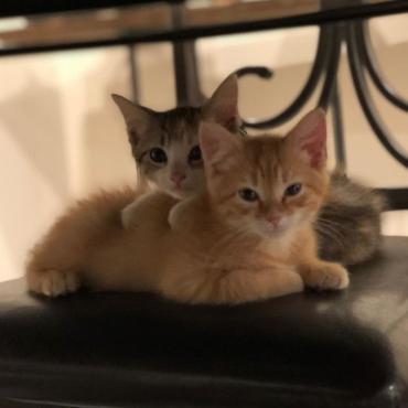 Компания осинови 2 котета, за да повиши духа на служителите си